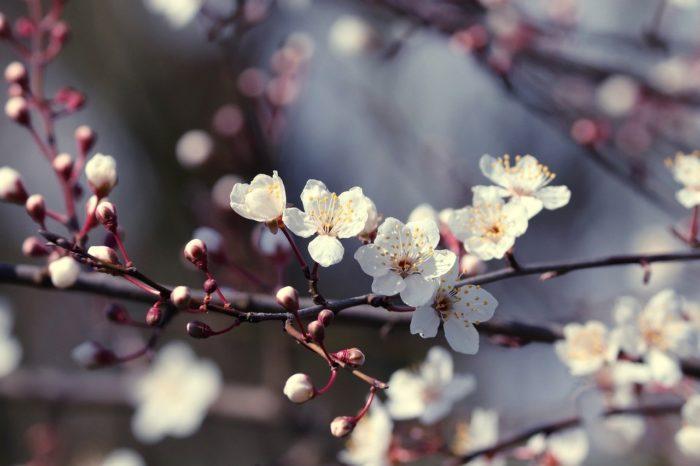 #Hoffnungsschimmer Vom 11. April – Ostergrüße Unseres Diözesanvorsitzenden