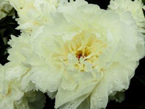 flower-2370948_1280