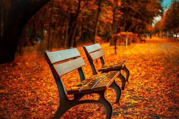 Herbst_web